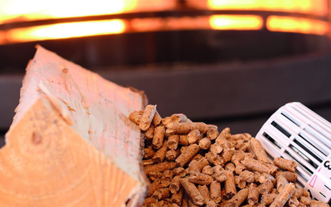 Biomasse – Warum sich eine Investition in Biomasse lohnt.